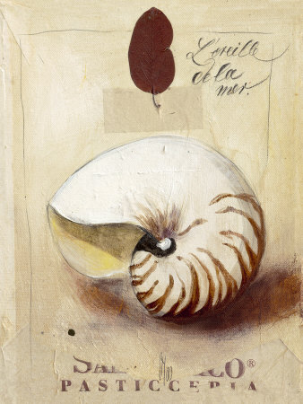 ig2412l-oreille-de-la-mer-posters