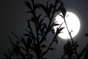 03437-lune-lumiere